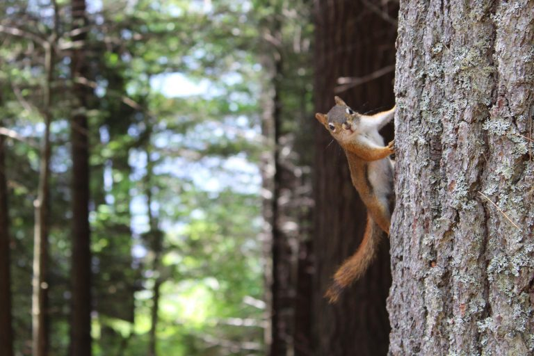 A squirrel hanging on tree in the forest